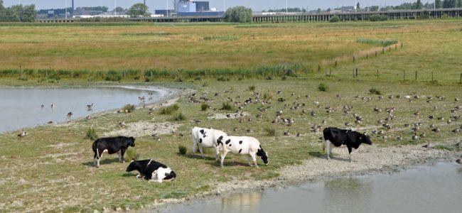 Natuurgebied in Vlaanderen met industrie op de achtergrond verkleind